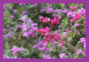 A Bee In Sage and Coral Vine